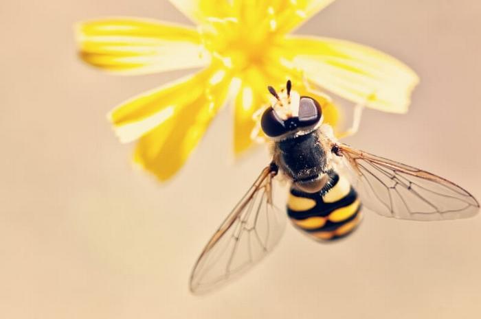 Zéro déchet : une abeille butine